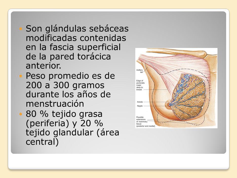 Son glándulas sebáceas modificadas contenidas en la fascia superficial de la pared torácica anterior.