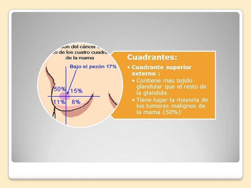 Cuadrantes: Cuadrante superior externo : Contiene mas tejido glandular que el resto de la glandula.