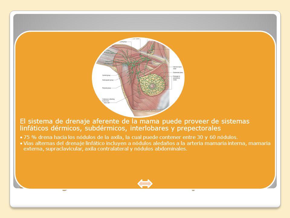 Drenaje linfático de los pechos: