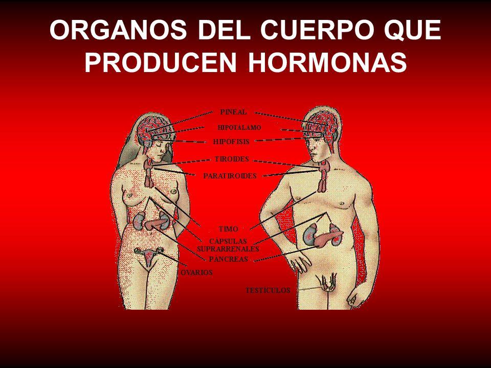 ORGANOS DEL CUERPO QUE PRODUCEN HORMONAS