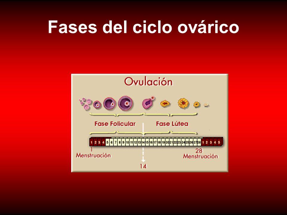 Fases del ciclo ovárico