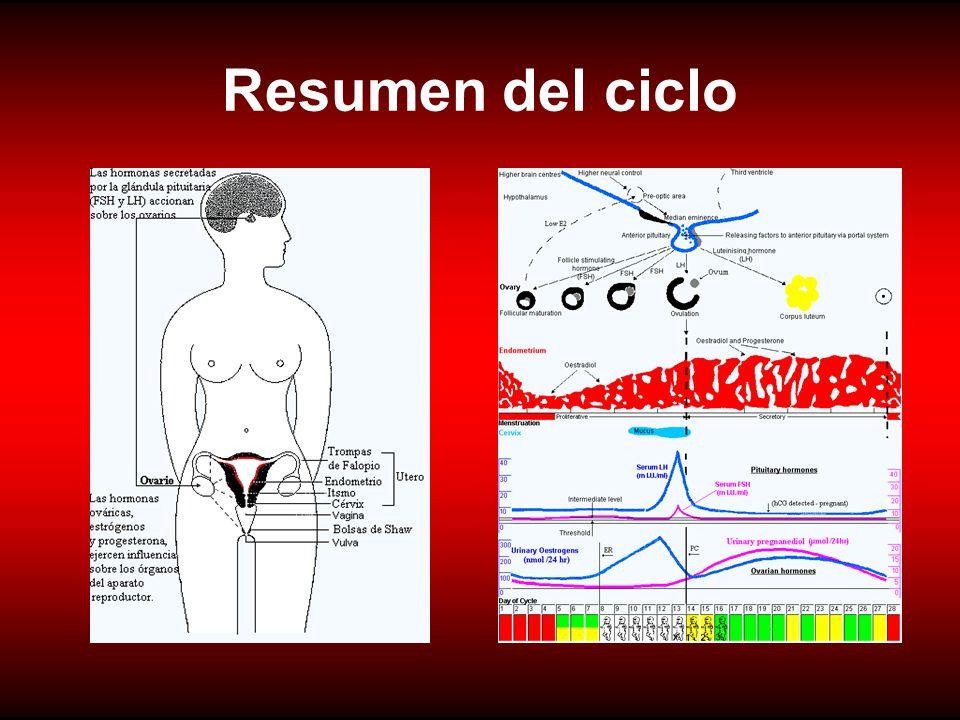 Resumen del ciclo