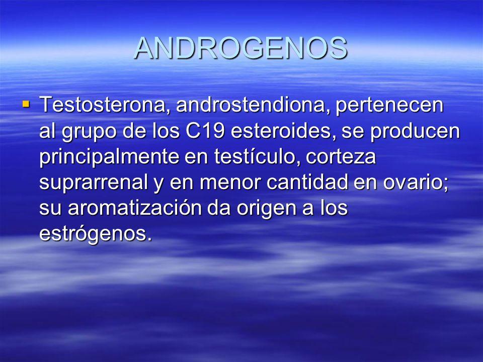 ANDROGENOS