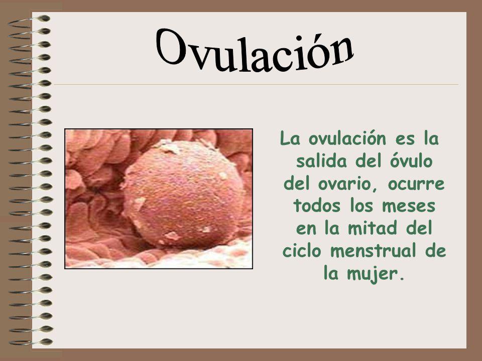 Ovulación La ovulación es la salida del óvulo del ovario, ocurre todos los meses en la mitad del ciclo menstrual de la mujer.