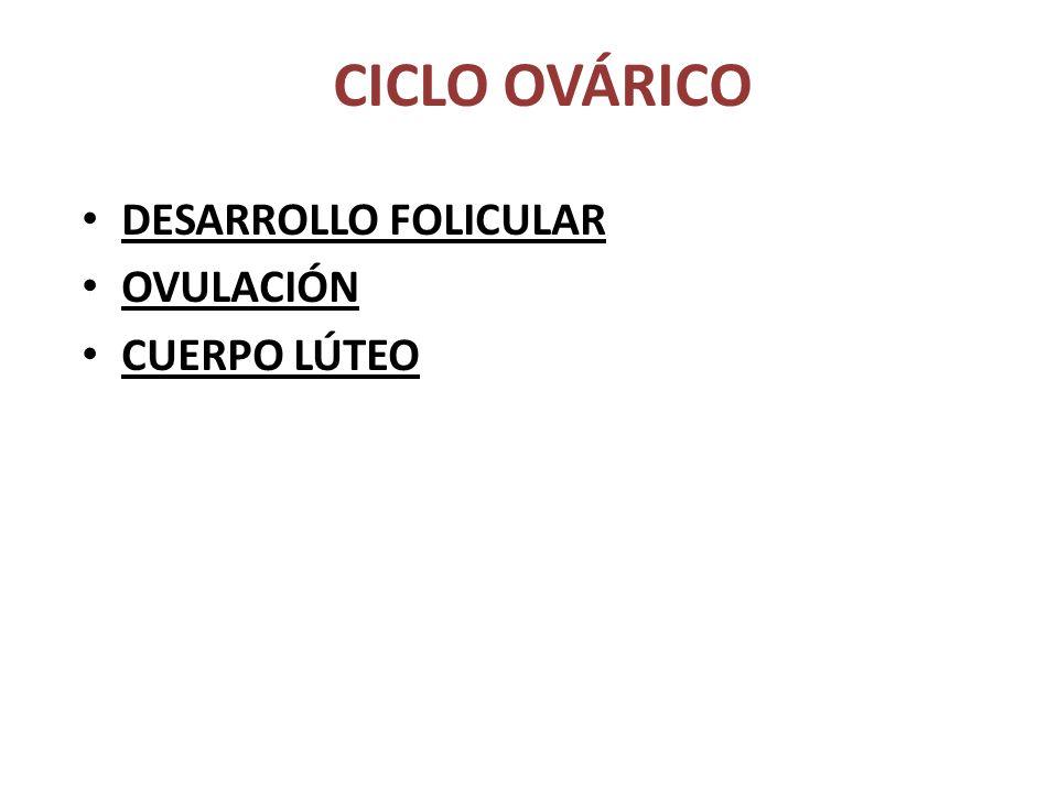CICLO OVÁRICO DESARROLLO FOLICULAR OVULACIÓN CUERPO LÚTEO