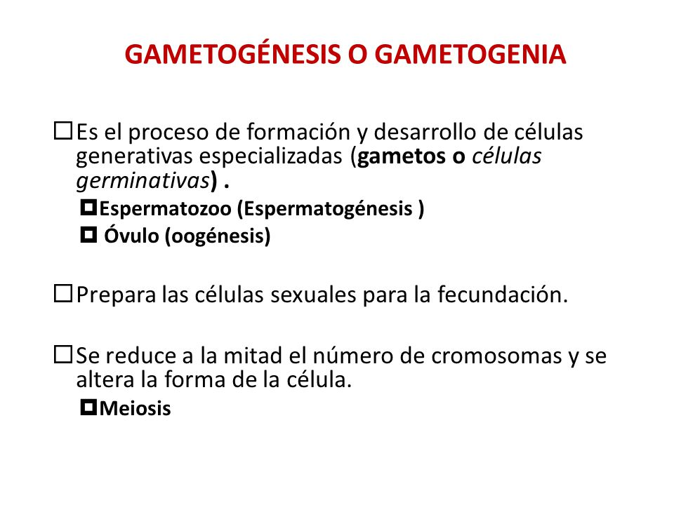 GAMETOGÉNESIS O GAMETOGENIA