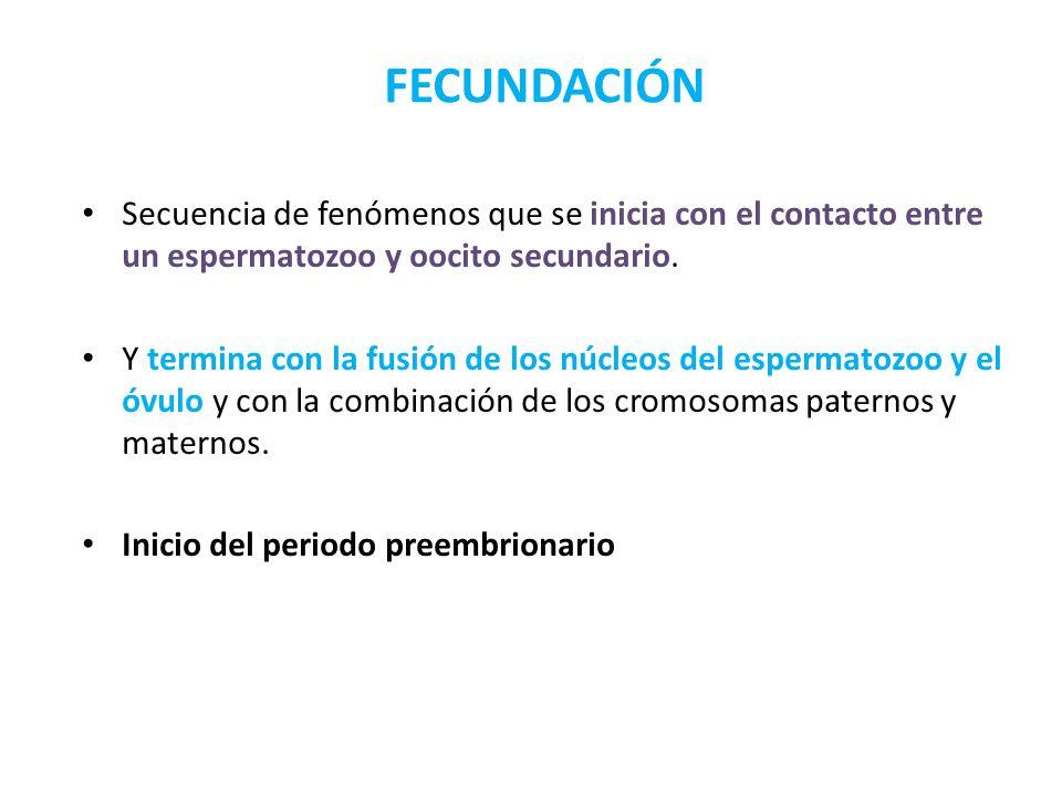 FECUNDACIÓN Secuencia de fenómenos que se inicia con el contacto entre un espermatozoo y oocito secundario.