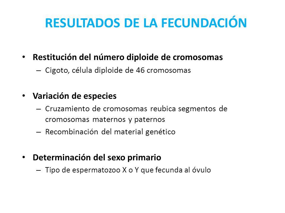 RESULTADOS DE LA FECUNDACIÓN