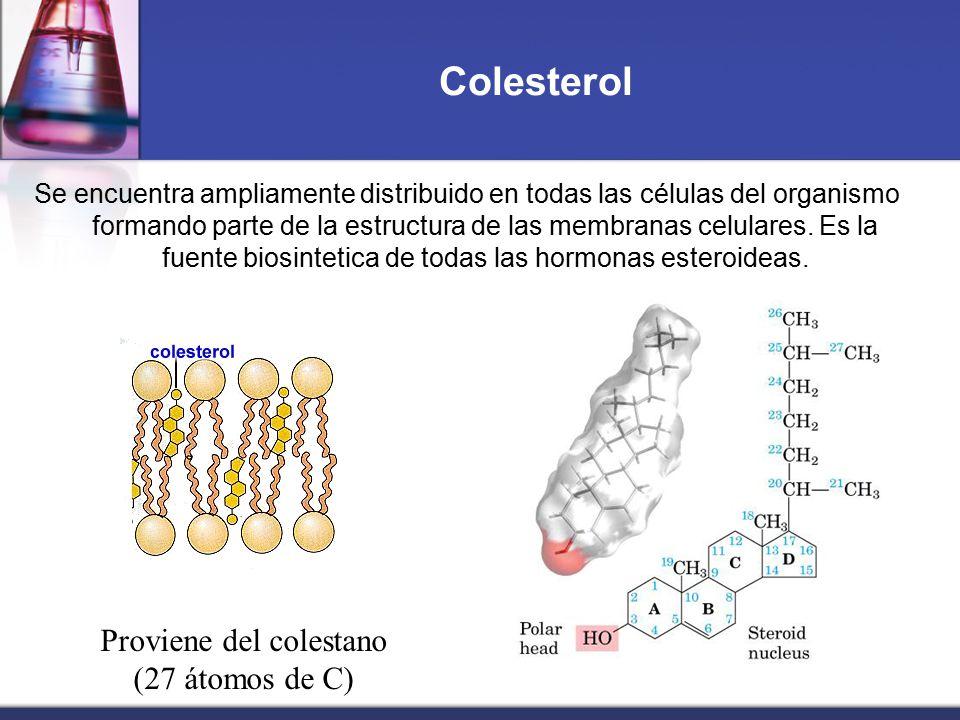 Proviene del colestano (27 átomos de C)