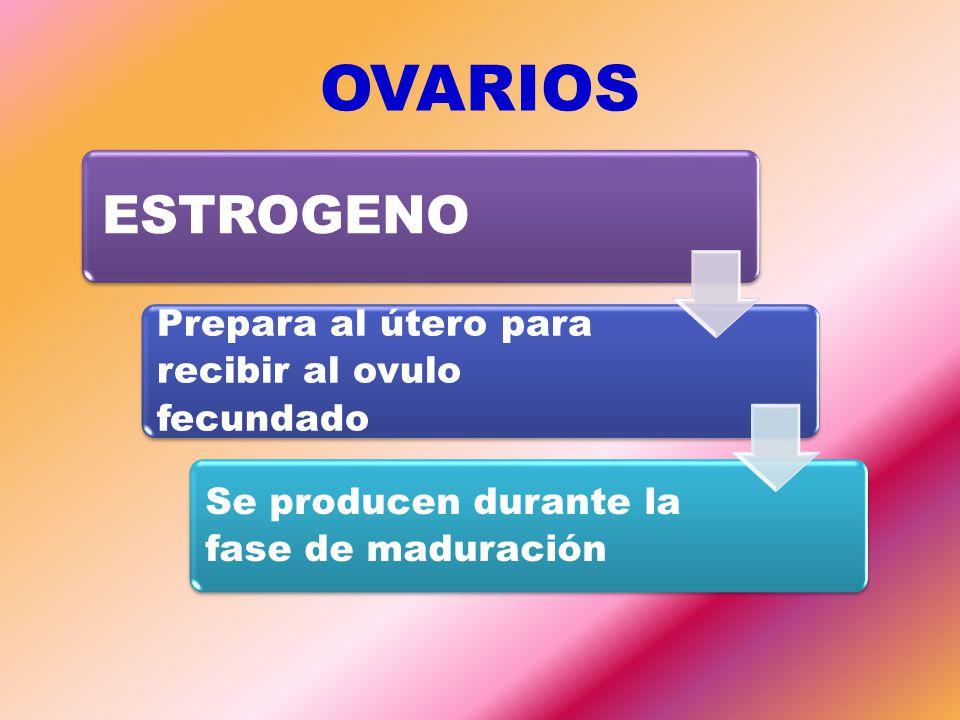 OVARIOS ESTROGENO Prepara al útero para recibir al ovulo fecundado