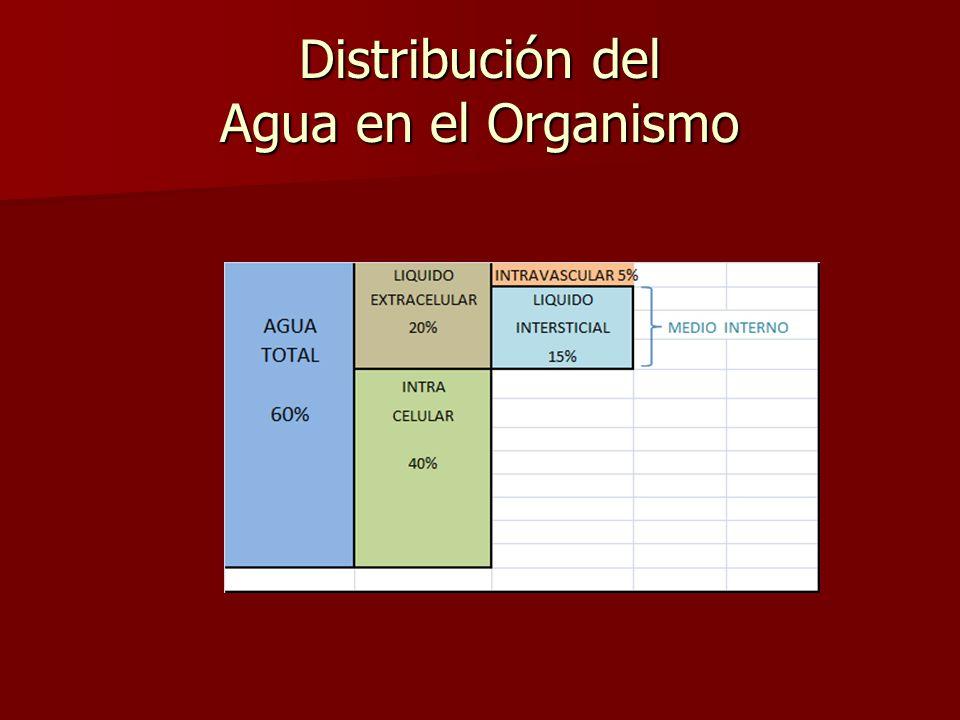 Distribución del Agua en el Organismo