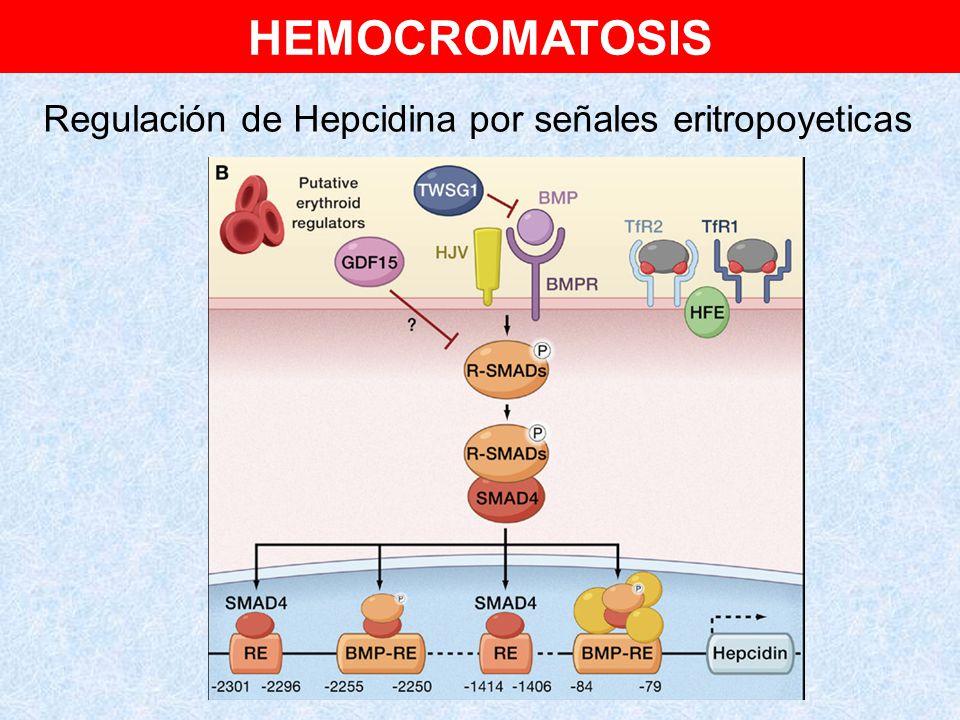 Regulación de Hepcidina por señales eritropoyeticas