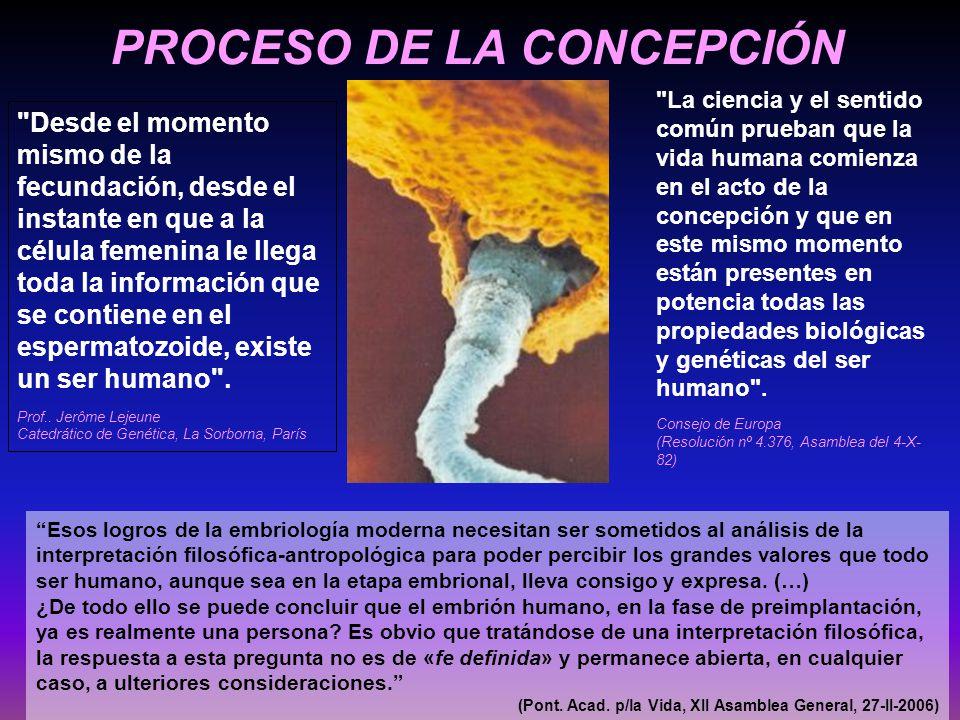 PROCESO DE LA CONCEPCIÓN