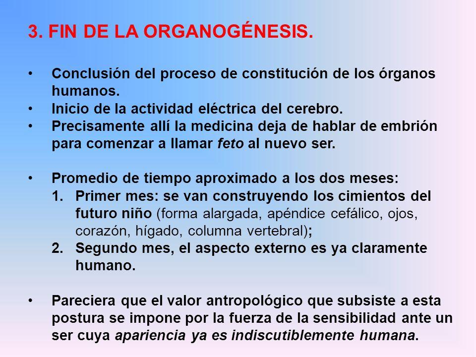 3. FIN DE LA ORGANOGÉNESIS.