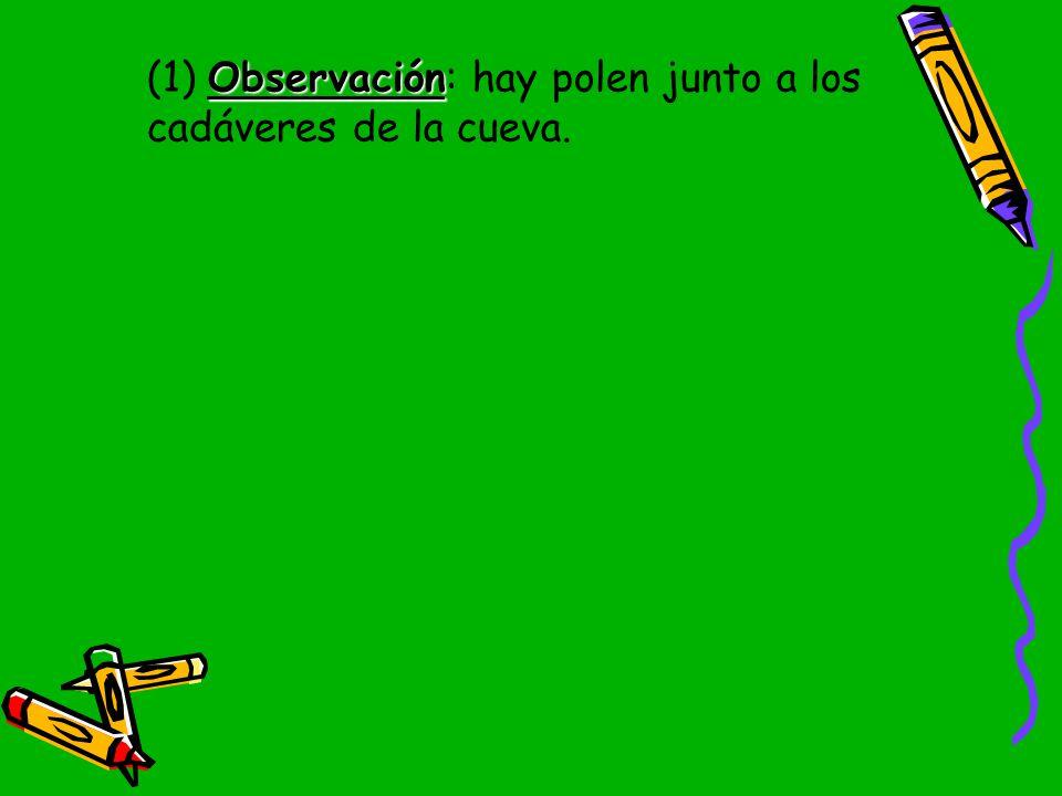 (1) Observación: hay polen junto a los cadáveres de la cueva.