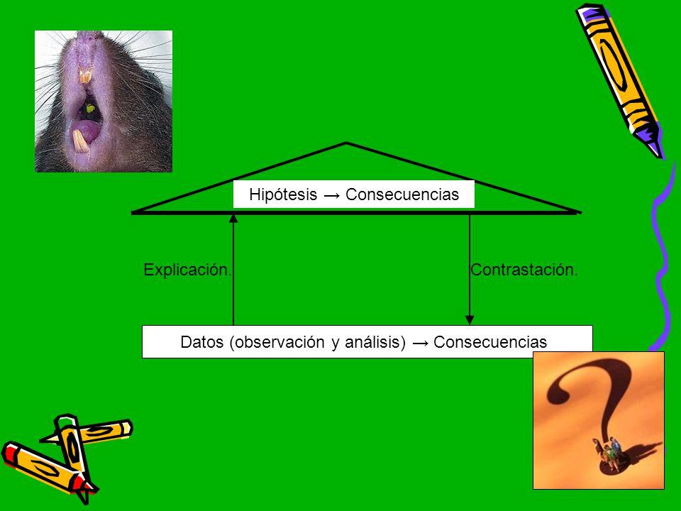 Hipótesis → Consecuencias