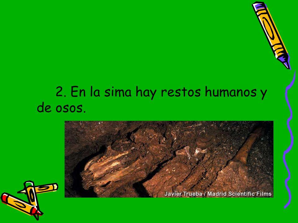 2. En la sima hay restos humanos y de osos.
