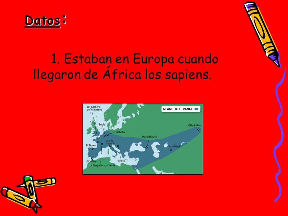 Datos: 1. Estaban en Europa cuando llegaron de África los sapiens.
