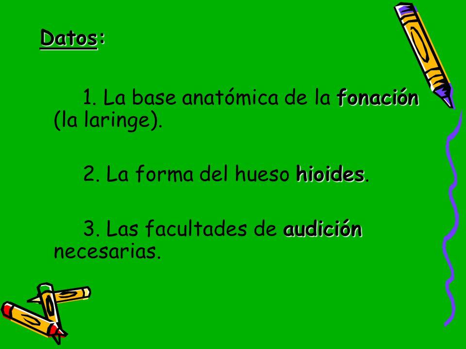 Datos: 1. La base anatómica de la fonación (la laringe).