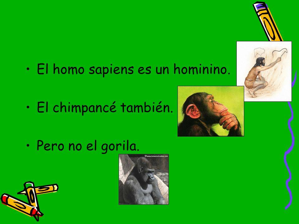 El homo sapiens es un hominino.