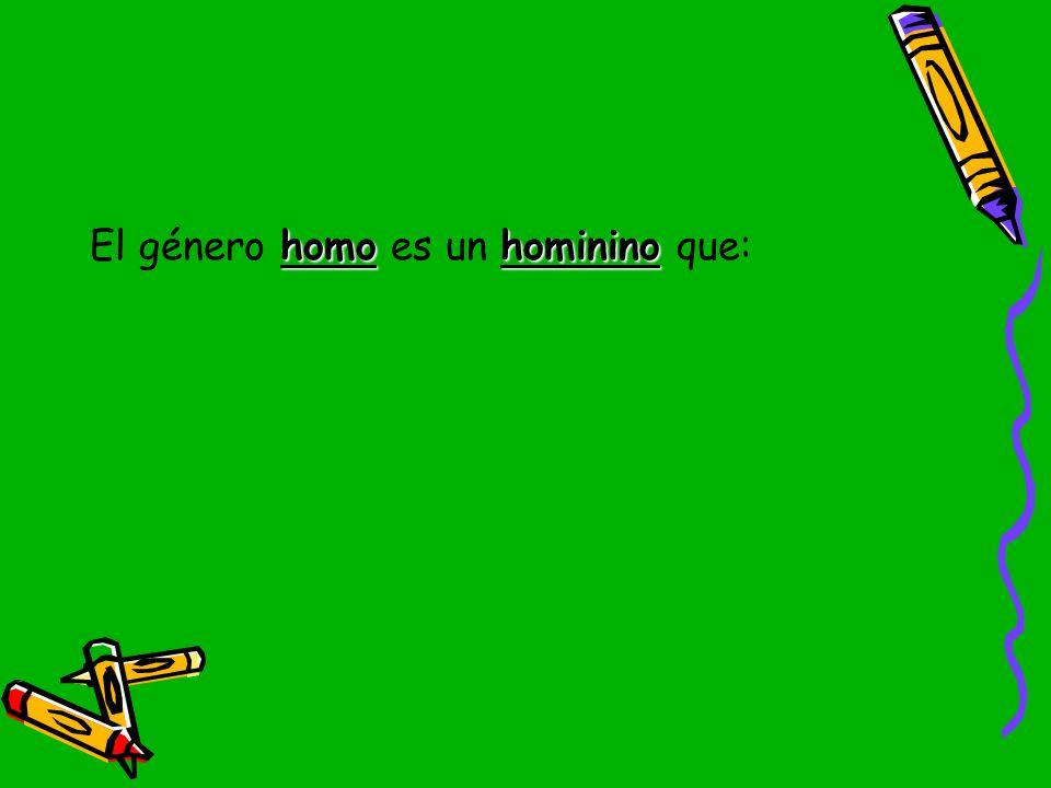 El género homo es un hominino que: