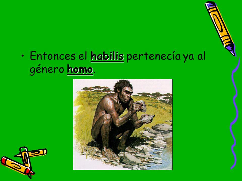 Entonces el habilis pertenecía ya al género homo.