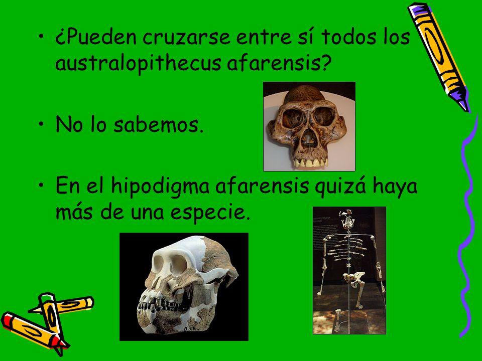 ¿Pueden cruzarse entre sí todos los australopithecus afarensis