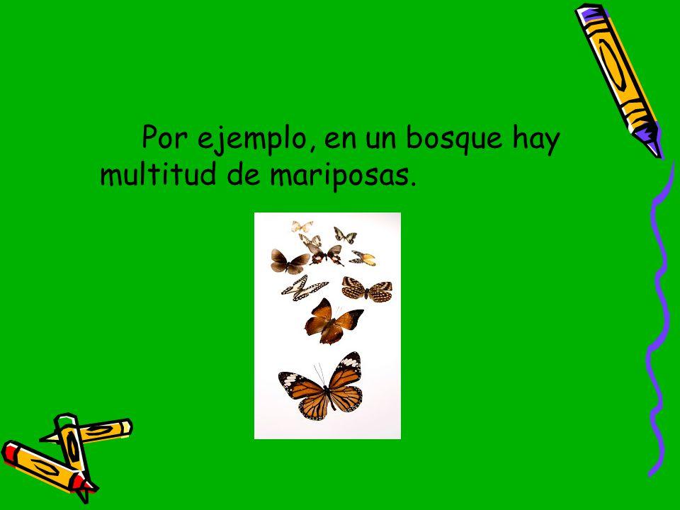 Por ejemplo, en un bosque hay multitud de mariposas.