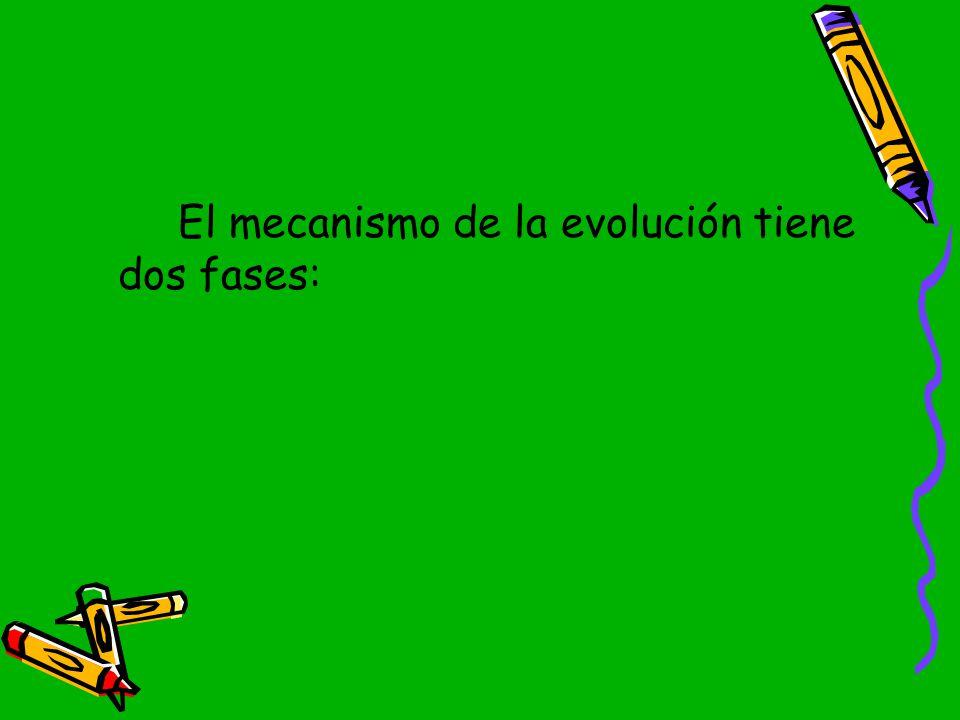 El mecanismo de la evolución tiene dos fases: