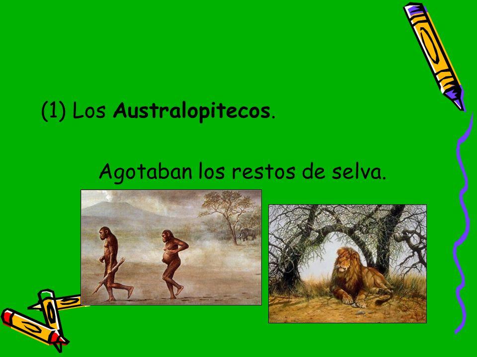 Los Australopitecos. Agotaban los restos de selva.