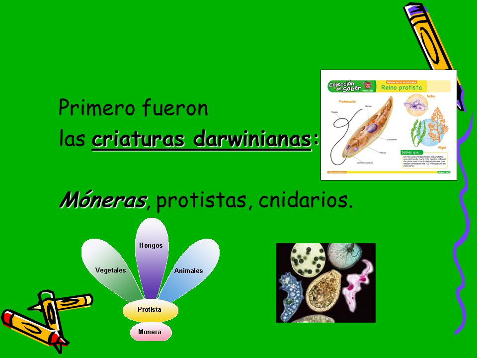 Primero fueron las criaturas darwinianas: Móneras, protistas, cnidarios.