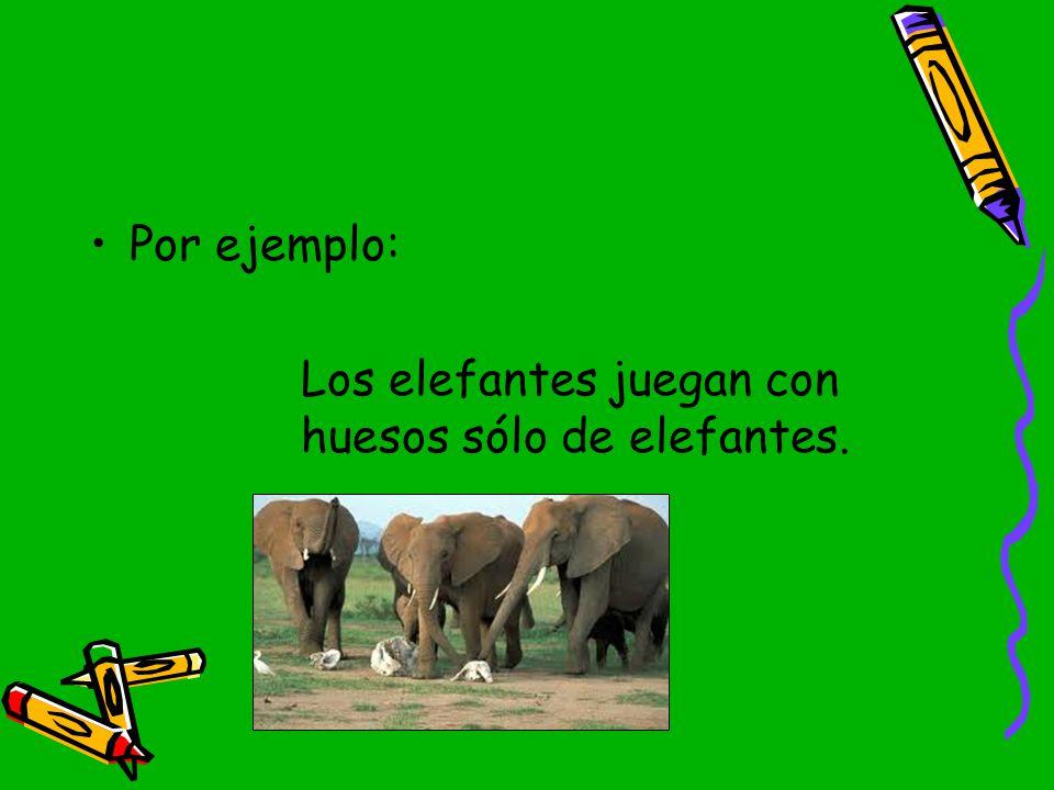 Por ejemplo: Los elefantes juegan con huesos sólo de elefantes.