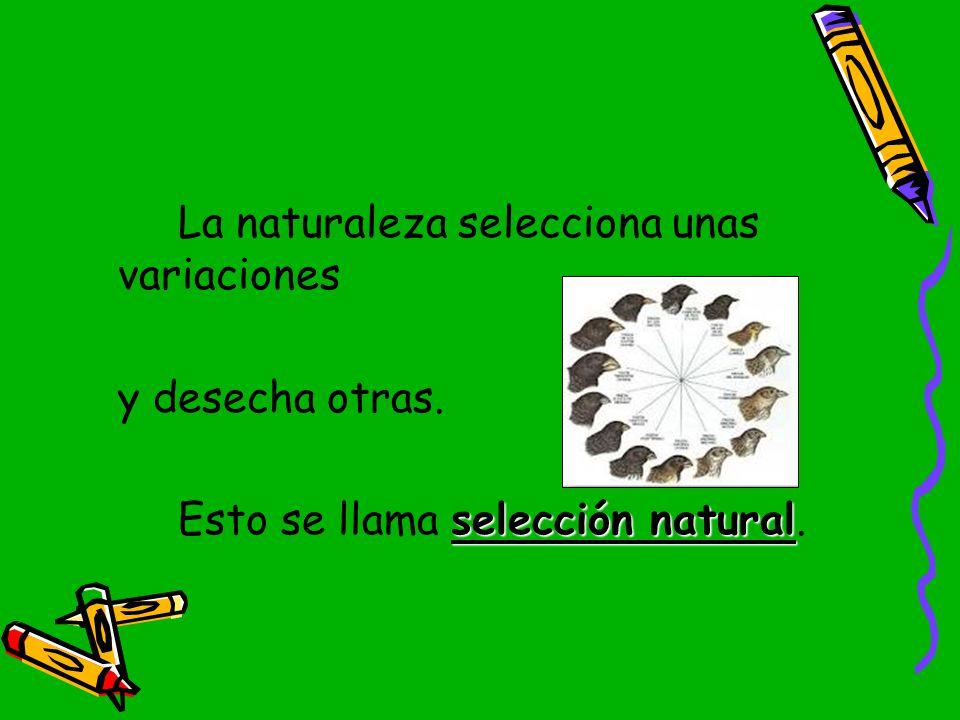 La naturaleza selecciona unas variaciones