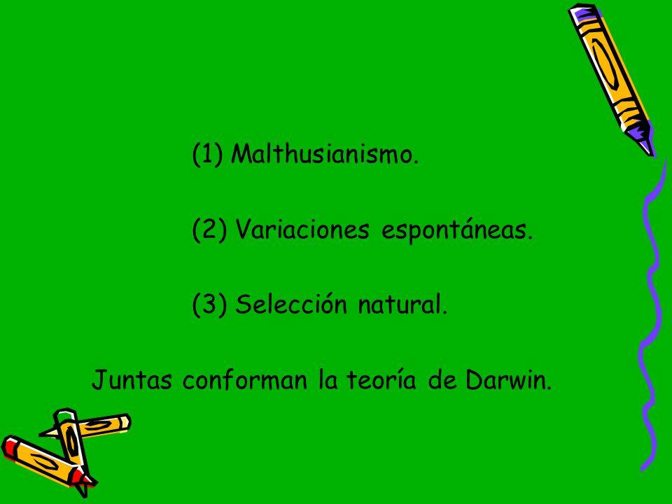 (1) Malthusianismo. (2) Variaciones espontáneas. (3) Selección natural.