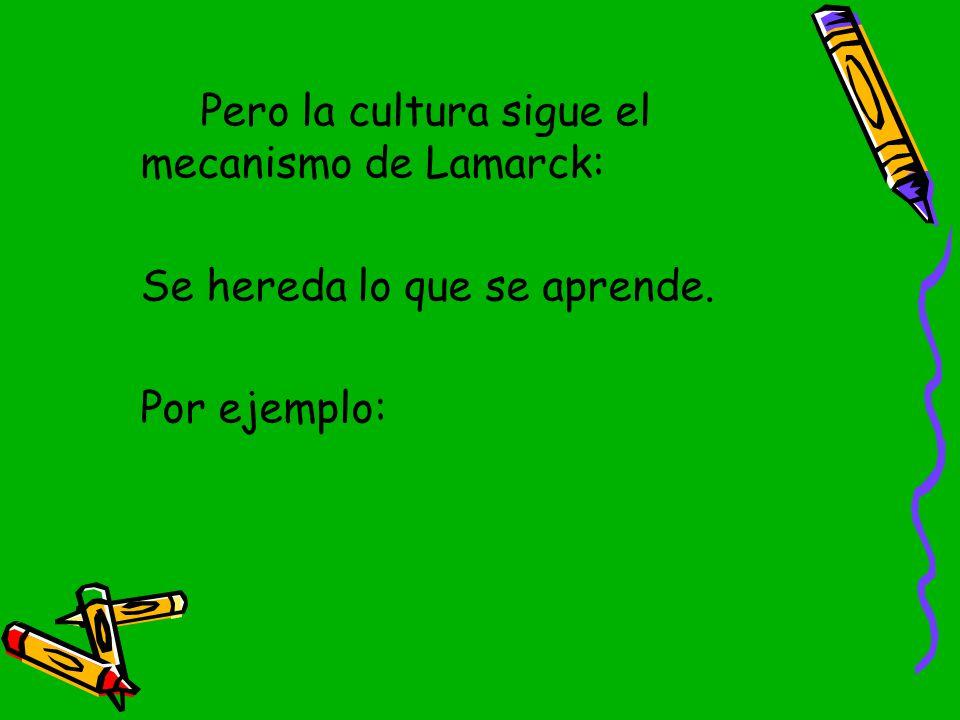 Pero la cultura sigue el mecanismo de Lamarck: