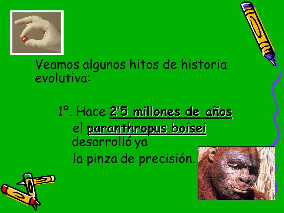 Veamos algunos hitos de historia evolutiva: