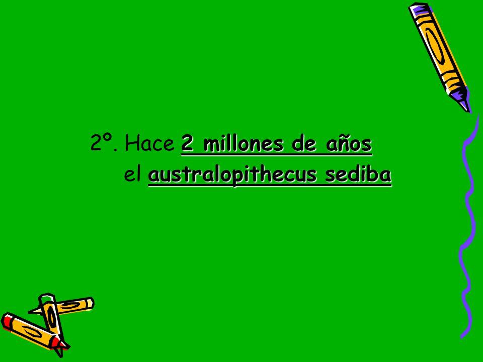 2º. Hace 2 millones de años el australopithecus sediba
