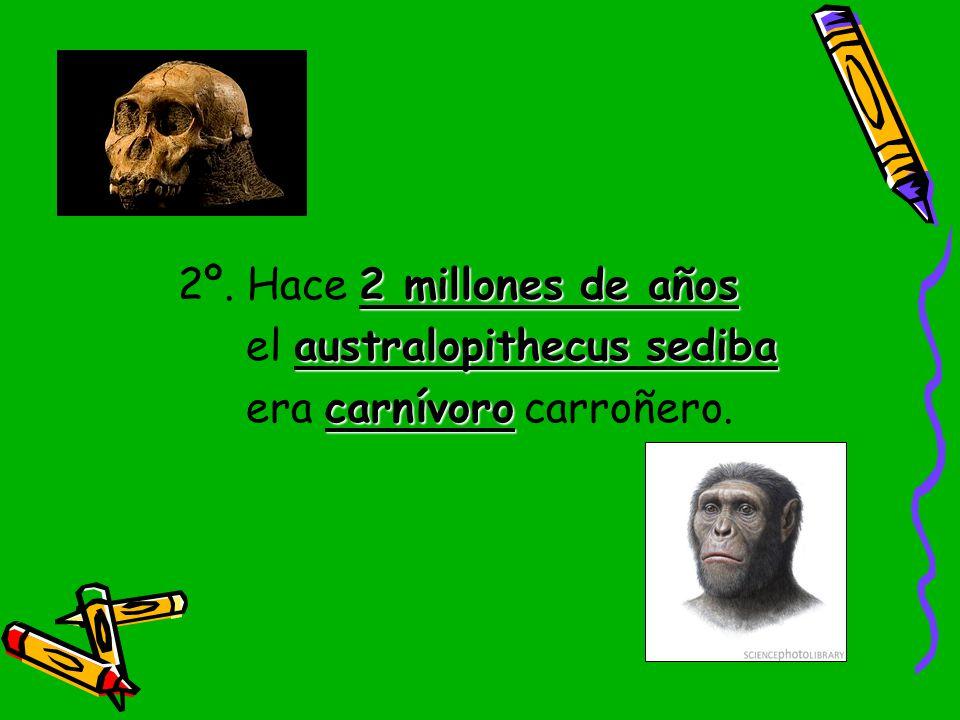 2º. Hace 2 millones de años el australopithecus sediba era carnívoro carroñero.