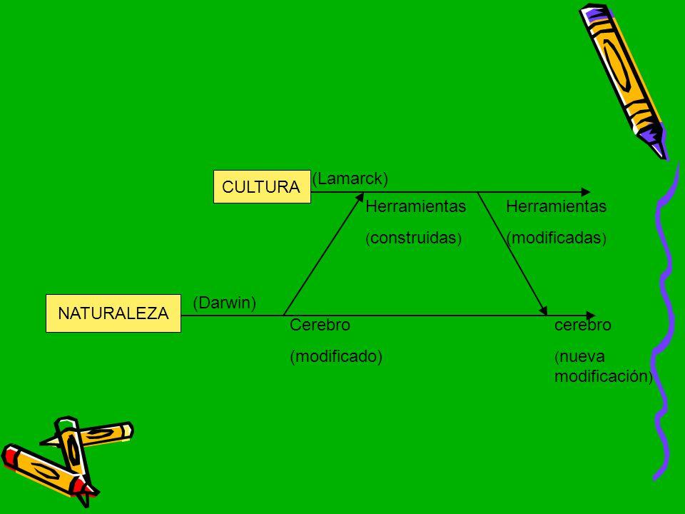(Lamarck) CULTURA Herramientas Herramientas (modificadas) (Darwin)