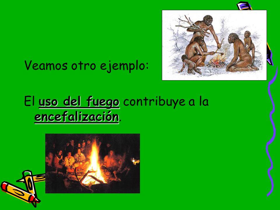 Veamos otro ejemplo: El uso del fuego contribuye a la encefalización.