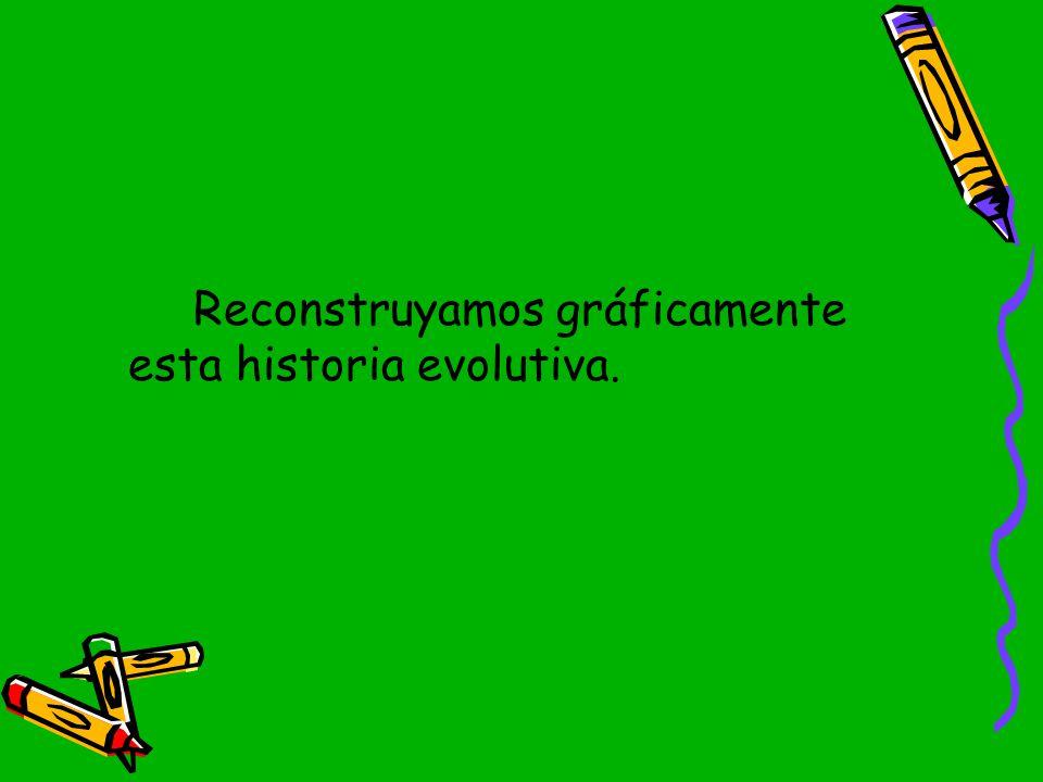 Reconstruyamos gráficamente esta historia evolutiva.