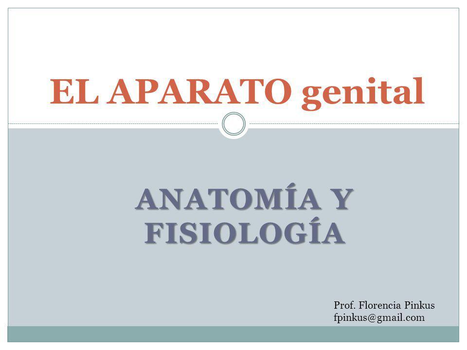 EL APARATO genital Anatomía y fisiología Prof. Florencia Pinkus