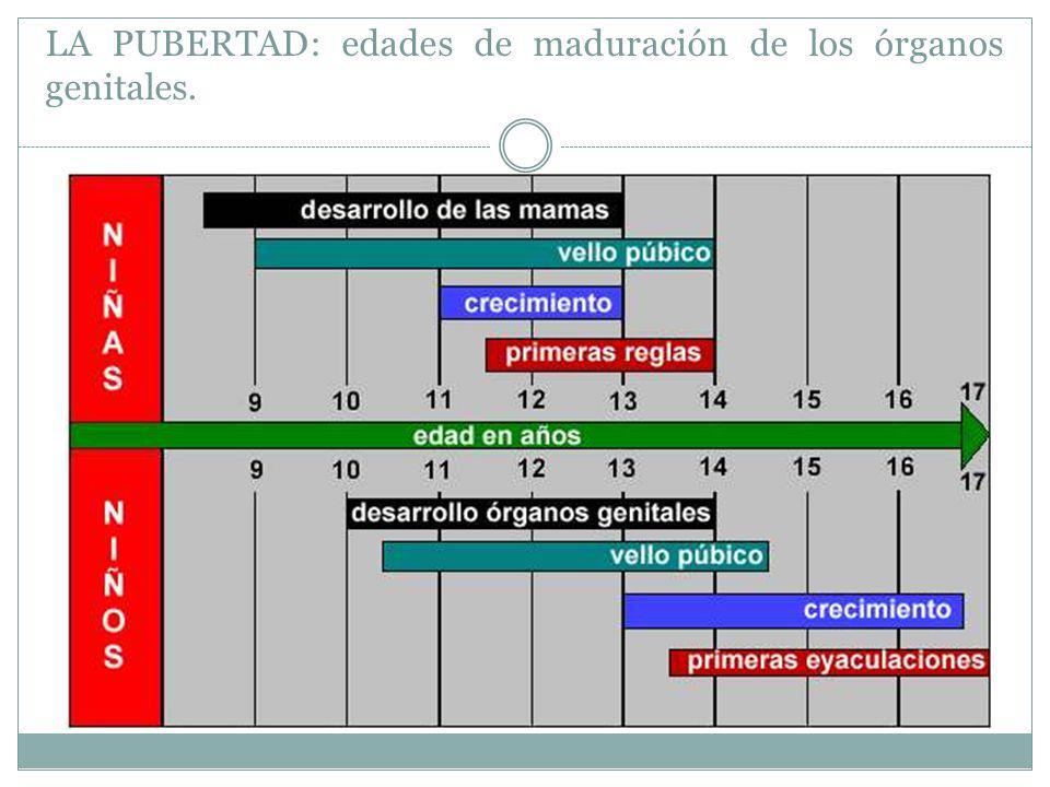 LA PUBERTAD: edades de maduración de los órganos genitales.