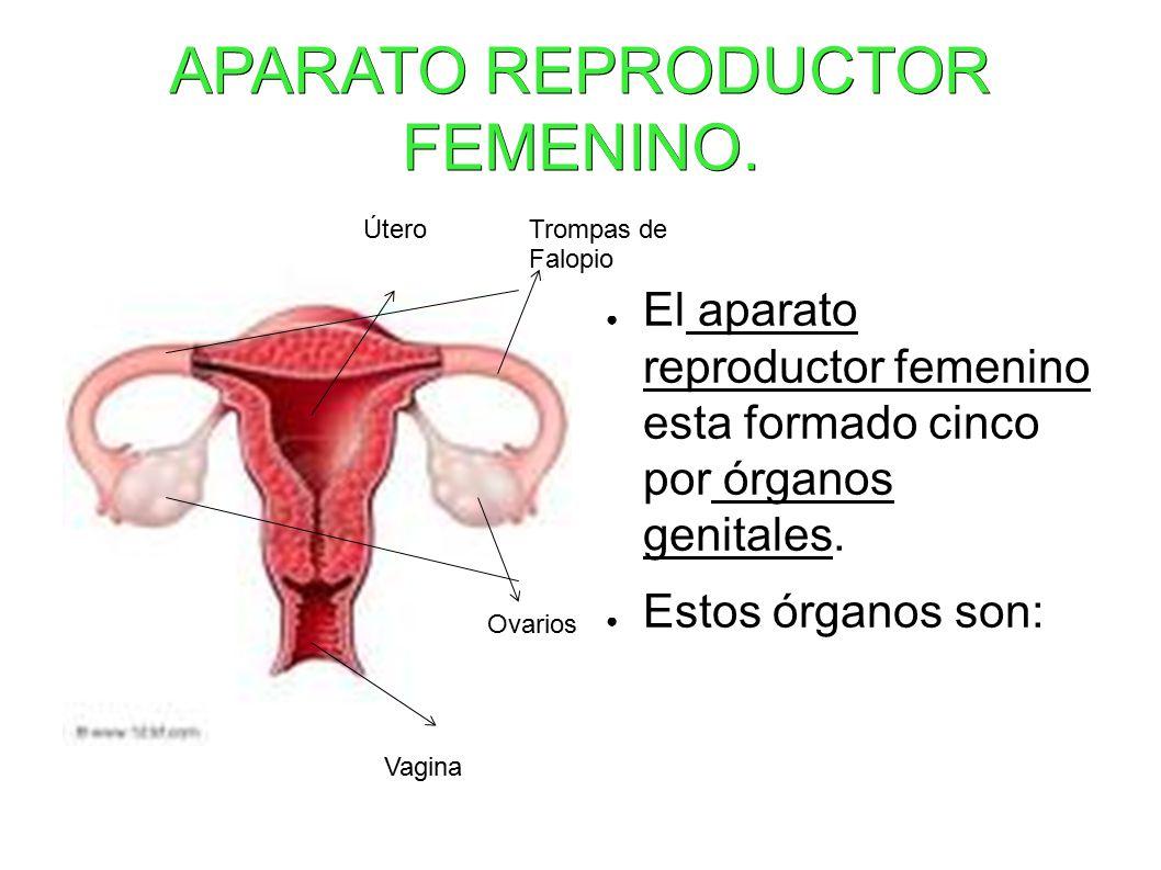 APARATO REPRODUCTOR FEMENINO.