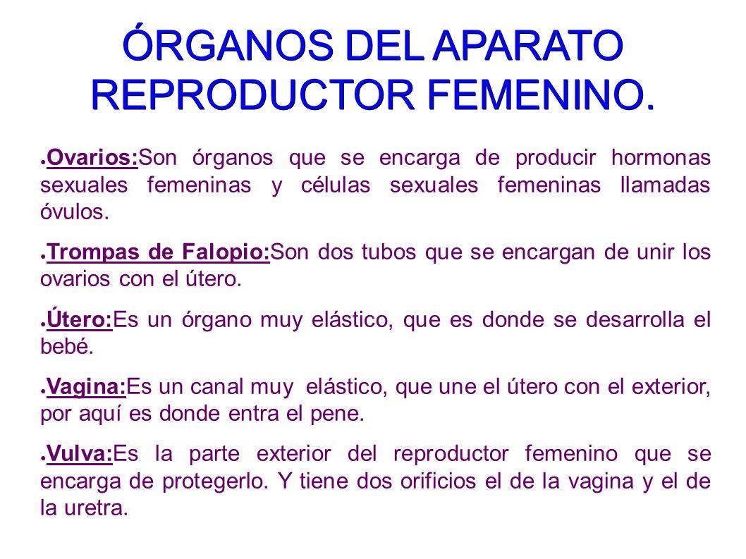 ÓRGANOS DEL APARATO REPRODUCTOR FEMENINO.