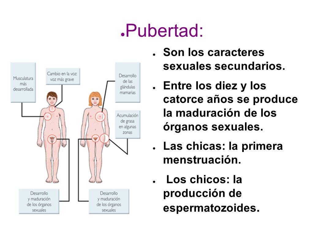 Pubertad: Son los caracteres sexuales secundarios.