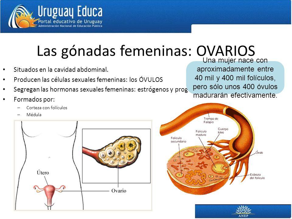 Las gónadas femeninas: OVARIOS