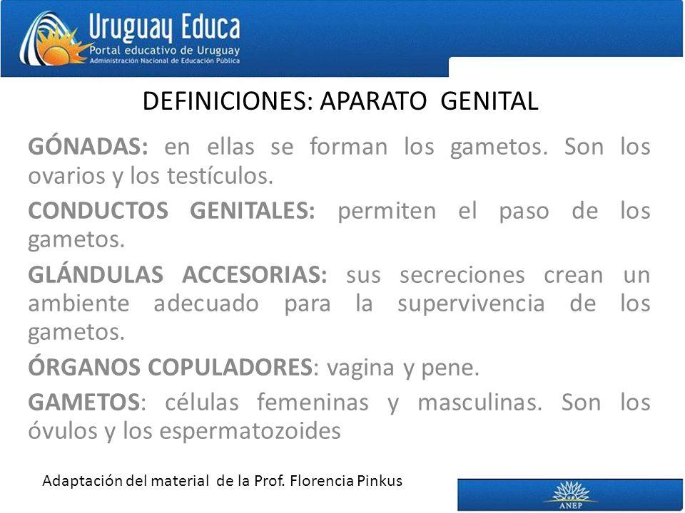 DEFINICIONES: APARATO GENITAL