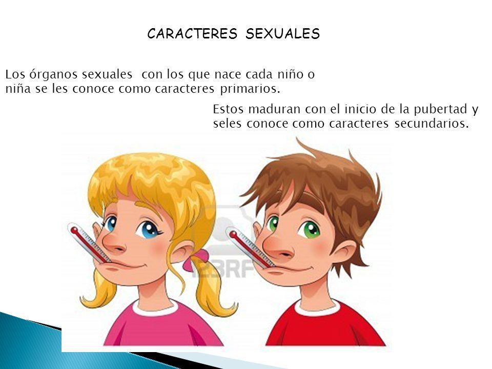 CARACTERES SEXUALES Los órganos sexuales con los que nace cada niño o niña se les conoce como caracteres primarios.