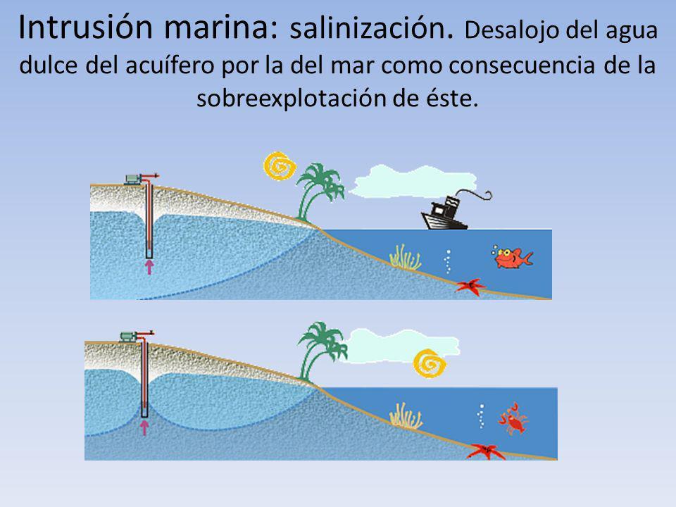 Intrusión marina: salinización